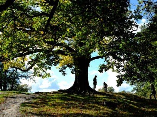 Hampstead-Heath-walk